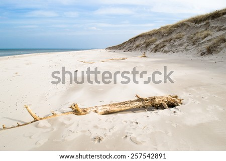 Desert landscape with fallen trees, Slowinski National Park, Poland, Baltic Sea - stock photo