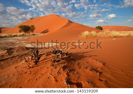 Desert landscape with  grasses, red sand dunes and African Acacia trees, Sossusvlei, Namibia  - stock photo