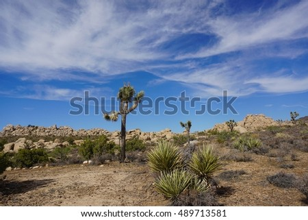 Desert Landscape with Joshua Trees, Boulders and Rock Formations. Mojave Desert, California.