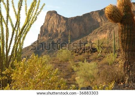 Desert landscapes - stock photo