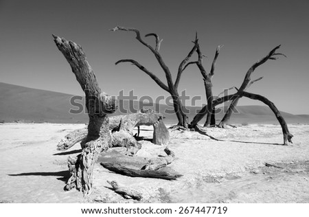 Desert, Namibia, Death valley, art of nature - stock photo