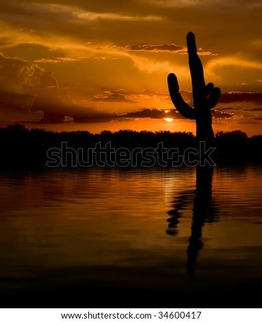Desert Oasis - stock photo