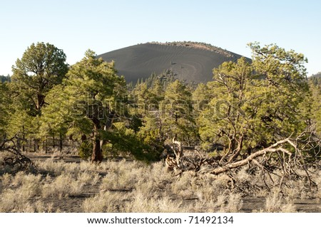 desert plants and pine trees in front of Sunset Crater
