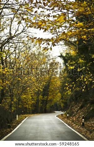 desert road in autumn - stock photo