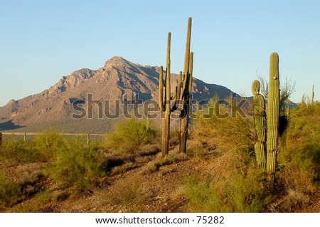 desert scene near Picacho Peak - stock photo