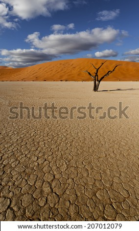desert scene with dead tree and clouds and parched earth