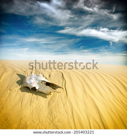 Desert skull, Africa - stock photo