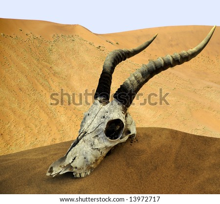 Desert skull, Namibia, Africa - stock photo