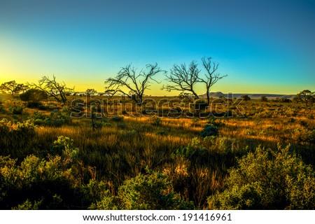Desert sunrise Australia - stock photo