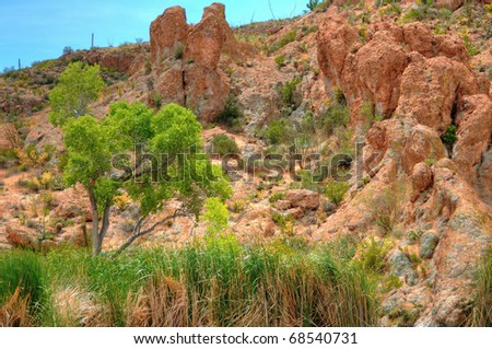 Desert tree within the rushes - stock photo