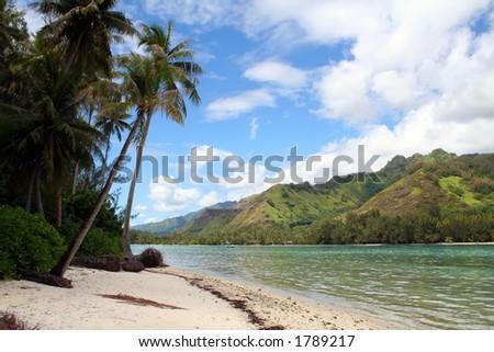 desert tropical sand beach, Moorea island - stock photo