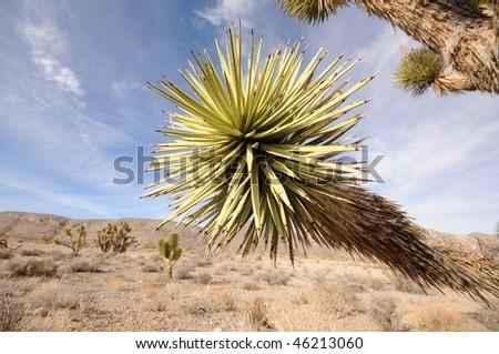 Desert vegetation and scenery from nevada, USA - stock photo