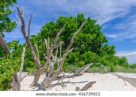 Deserted colorful beach in the dry tortugas in the Gulf of Mexico - stock photo