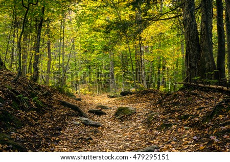 Deserted Forest Path in Autumn