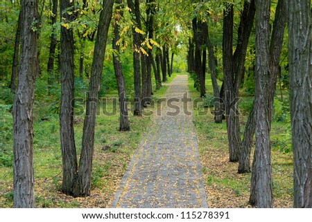 Deserted paved stone path through beautiful woodland lined with tree trunks and lush green undergrowth with diminishing perspective - stock photo