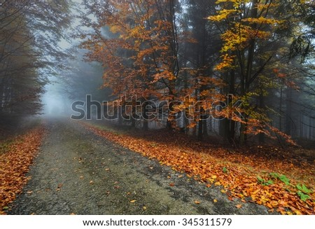 deserted road autumn forest - stock photo