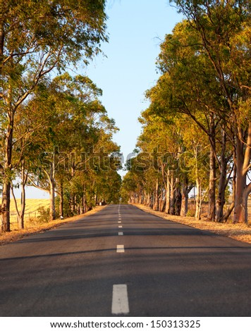 Deserted straight tree-lined tarred road with central markings disappearing in to the distance