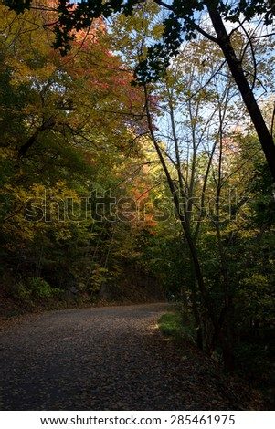 deserted way in a park in the middle of trees during indian summer - stock photo