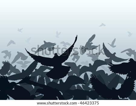 Design of a flock of pigeons taking off