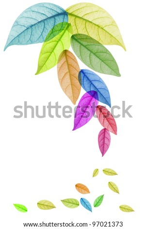 Design of Colorful leaf in white Background - stock photo