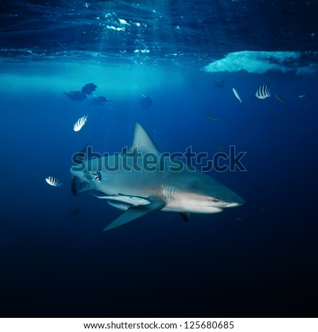 design underwater postcard big angry dangerous shark hunting in blue deep ocean - stock photo
