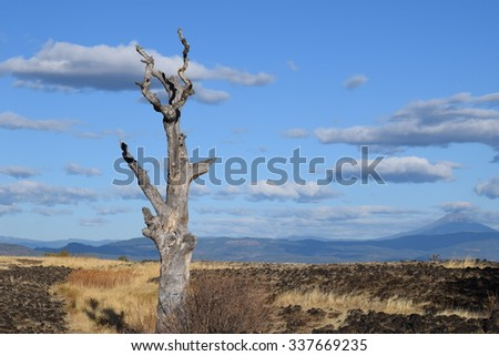Desolate landscape with single dead tree and clouds and dormant volcano