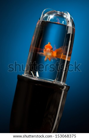 Despair Fish in a really bad situation which could represent on a funny way some business problems we could have of just bad moment during our life ! - stock photo