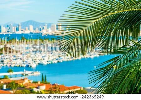 Destination San Diego, California. Palm Leaf and Blurred San Diego Cityscape Concept Photo. - stock photo