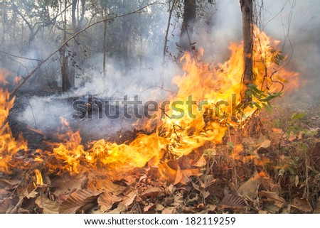Destroyed by burning tropical forest ,Thailand - stock photo