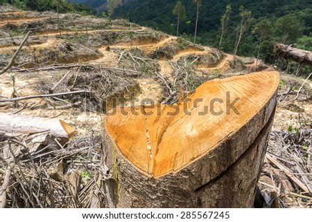 Destroyed forest with focus on chopped tree trunk as subject with land terrace for agriculture at background. Taken during coudy day lighting. - stock photo
