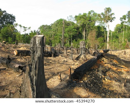 Destroyed tropical rainforest in Amazonia (Photo taken 20/01/2010)
