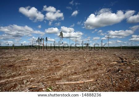 Destruction Forest Felling of natural forest, north Sweden - stock photo