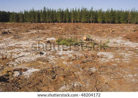 Destruction of a pine forest by logging - stock photo