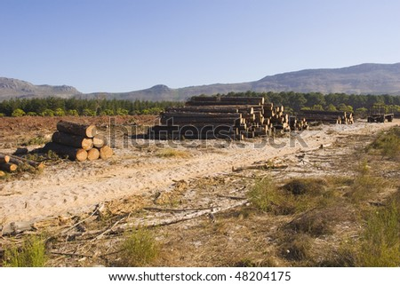 Destruction of a pine forest by logging