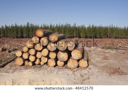 Destruction of forests due to logging - stock photo