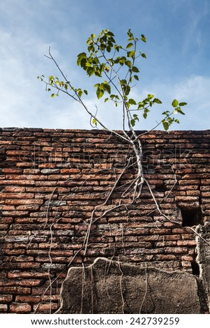 detail at Wat Phra Si Sanphet, the ruin of the former royal temple on the ground of the royal palace in Ayutthaya, Thailand - stock photo