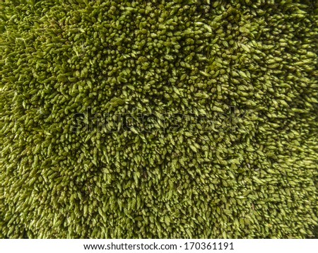 Detail close up of a moss located on the cortex of a tree, forest. Texture. Nobody. - stock photo