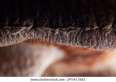 Detail from a shiitake mushrooms gills. - stock photo