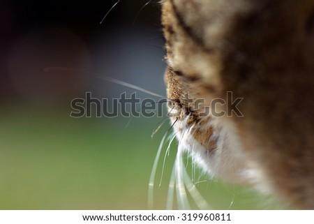 Detail ginger cat - stock photo