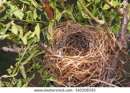 Detail of a beautiful natural empty birds nest in a tree - stock photo