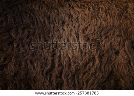 Detail of a bison fur - stock photo