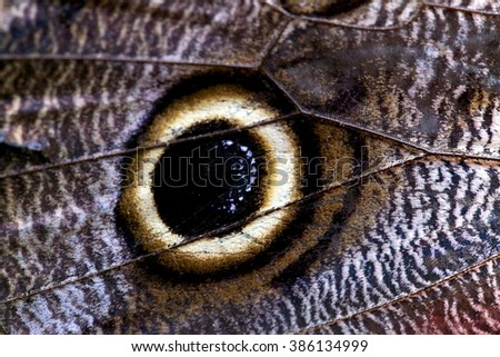 Detail of a blue morpho butterfly in the jungle in costa rica central america