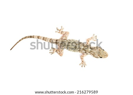 Detail of a common gecko - stock photo