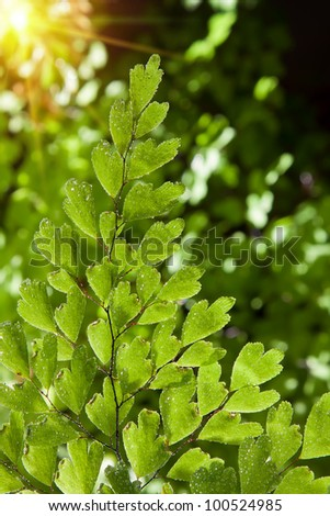 detail of a compound fern leaf with dew drops of water and sunlight