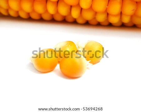detail of a corn on white background - stock photo