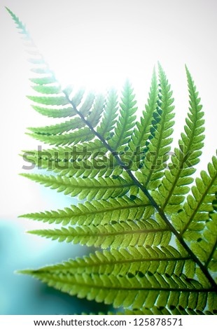 Detail of a fern plant in the forest.