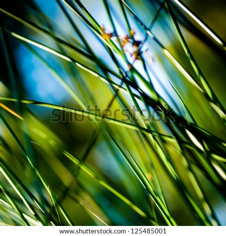 Detail of a flowering cane plant. - stock photo