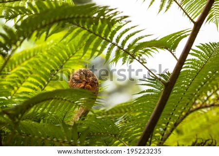 Detail of a fresh green fern leaf frond/Fern leaves - stock photo