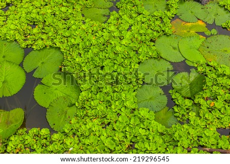 detail of a green pond background. - stock photo