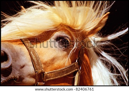 Detail of a horse head with flying mane - stock photo